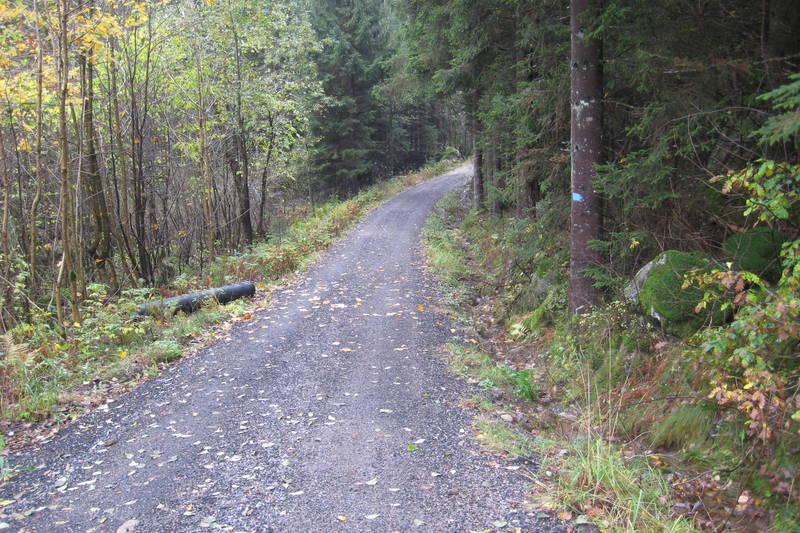 God skogsbilvei fra Hellersdalen.