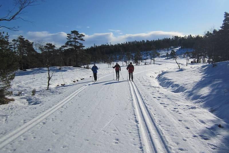 Glissen skogsterreng er vanlig på store deler av denne turen.