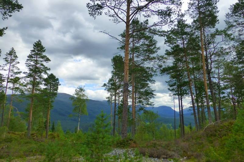 Utsikt fra Nybøkleiva mot nordaust.