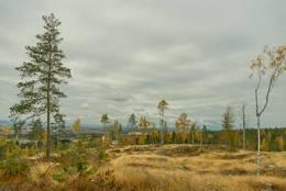 Det meste av Ausenfjellet er hugget ned - Foto: Øystein Berntsen