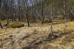 Klippetanga for Ti på Topp. - Foto: Kjell Fredriksen