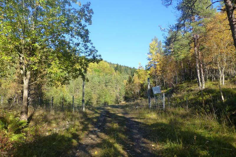 Utgangspunktet for turen, skogsveg på Maurset