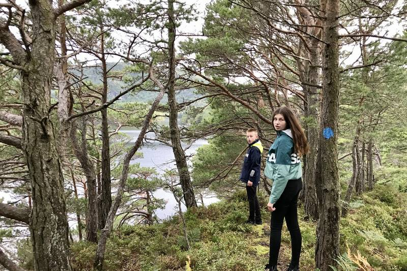 Skogsterreng med tidvis utsikt til vatnet og til sjøen nordover