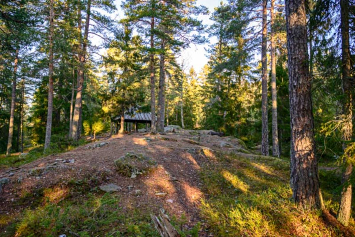 Bålplass i skogen