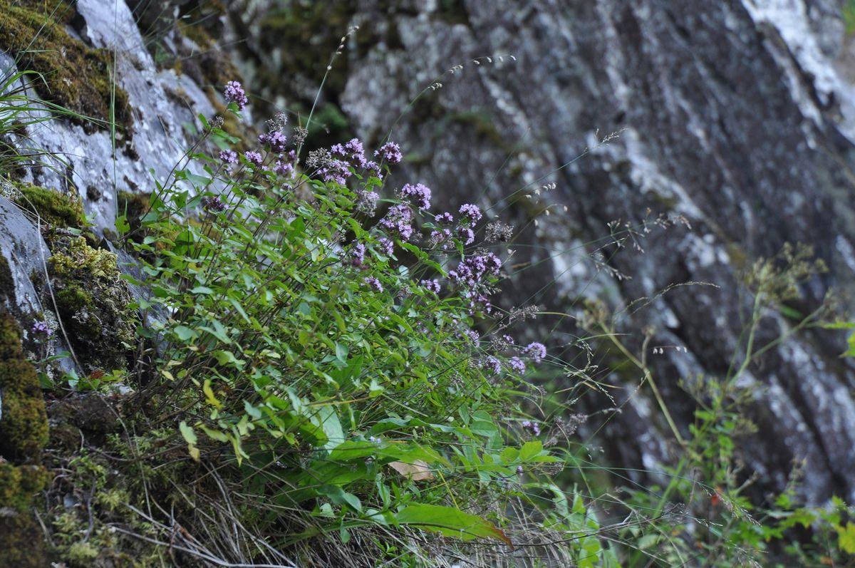Mange ulike arter vokser i reservatet