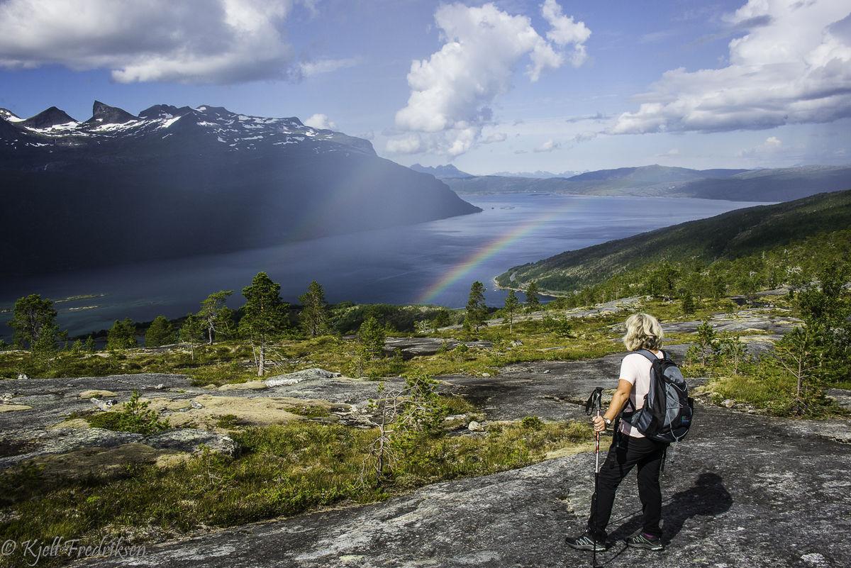 Her ser en indre del av Sagfjorden med Veggen til venstre for midten.