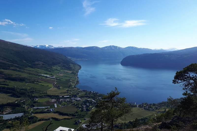 Utsikt over Innvikfjorden frå Åsefjellet