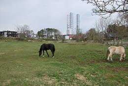 Ved Gausel Fritidsgård kan du hilse på mange forskjellige dyr -  Foto: Eirik Qverneland