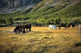Mange velger å komme til oss på hesteryggen - Foto: