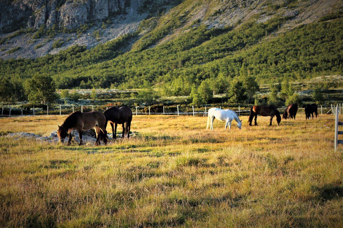Mange velger å komme til oss på hesteryggen