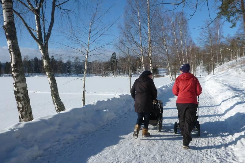 Fint trampede stier rundt Bogstad Gård på vinteren