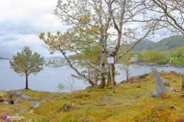 Gravrøysen - Foto: Simen Soltvedt