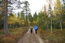 Gullverket (Eidsvoll) - Foto: Åshild Bjørndal / DNTs fotokonkurranse