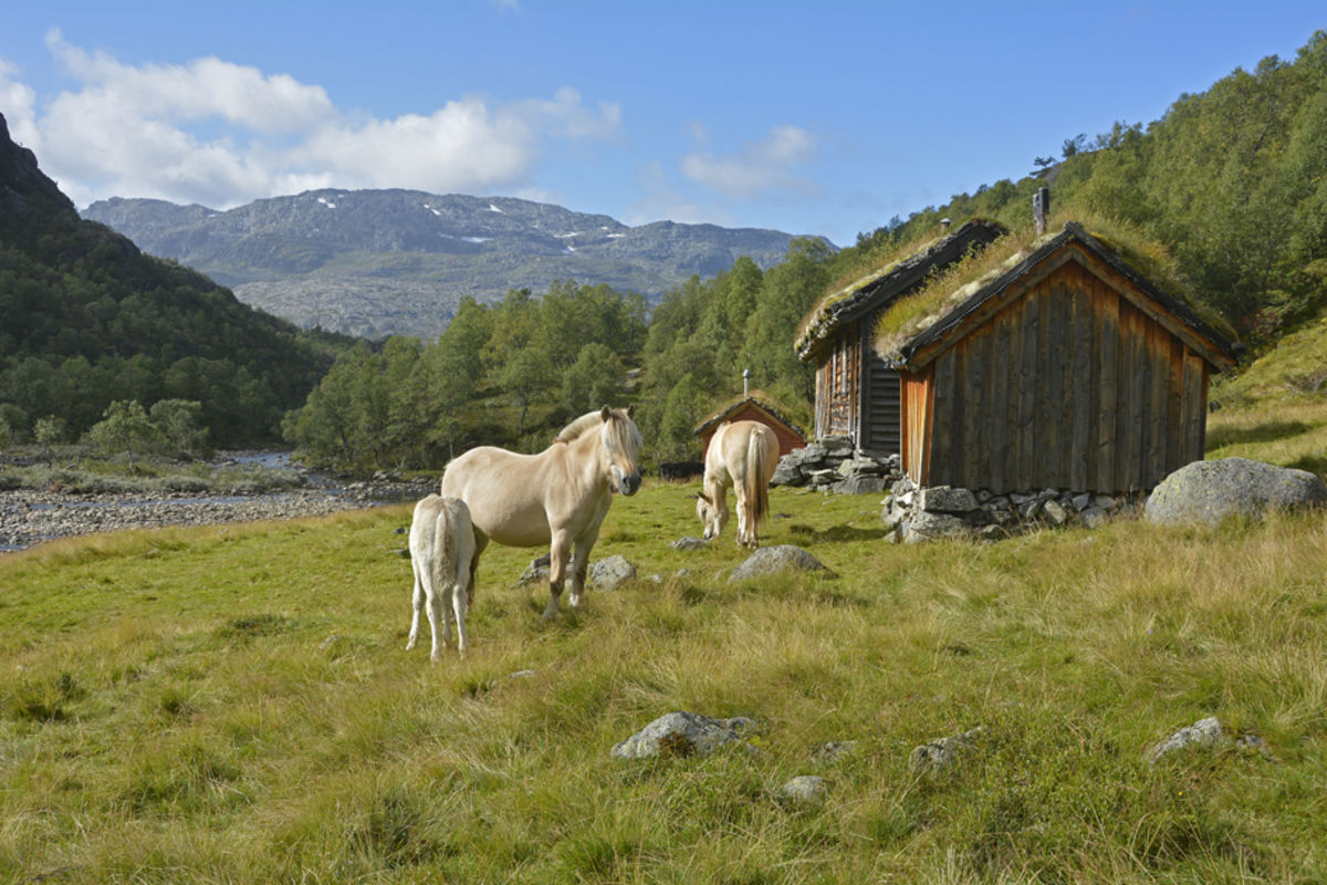 Gaukstøl ligger langs løypa