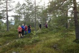 På vei videre til Varden på Grågalten kommer vi inn i et område med mer furuskog.  - Foto: Hilde Roland