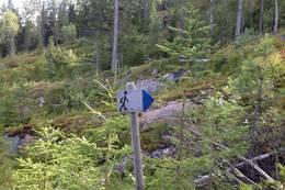 Følg gåmann-skilt og blå merker. - Foto: Hilde Roland