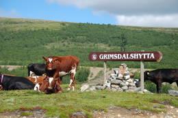 Velkomst-komiteen er på plass. Det er bare å spørre etter veien! - Foto: Sverre A. Larssen
