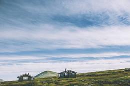 Gråhøgdbu -  Foto: Marius Dalseg Sætre