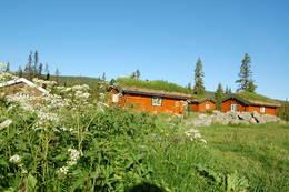 Sommer på åkersætra - Foto: Hamar og Hedemarken Turistforening