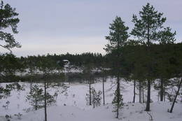 Fjellhov vinterstid - Foto: Nord-Trøndelag Turistforening