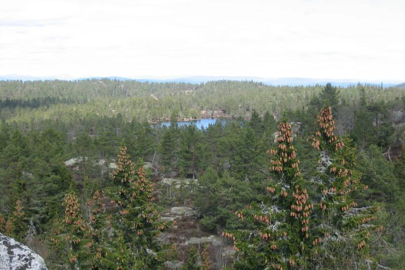 Surtvarden mot Krøkjevann Nord