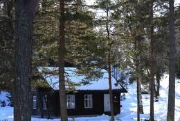 Koboltkoia eksteriør vinter  - Foto: Hans Petter Eriksen/DOT