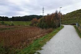 Takrørskog ved Stokkalandsvannet  -  Foto: Anette Hauge