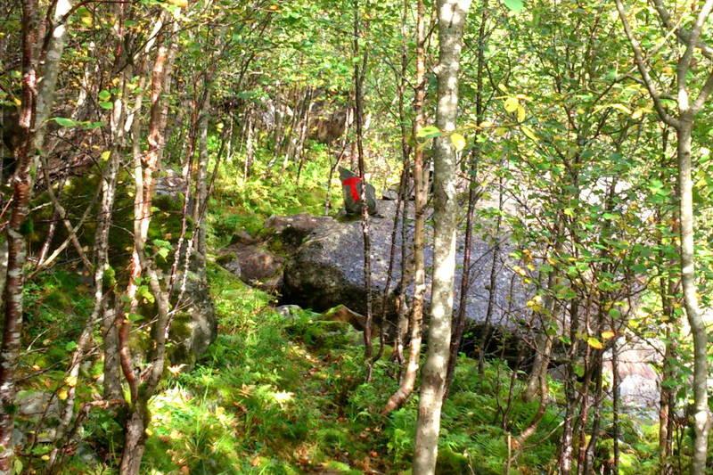 Litt skog på turen.