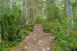 Skogsstien på vei til Drabovatnet -  Foto: Harald Atle Oppedal