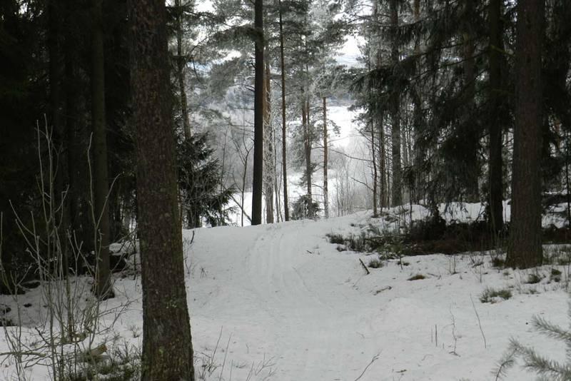Inn i skogen ved Våletjern. Det er nok ikke lurt å ta på de nyeste skiene.