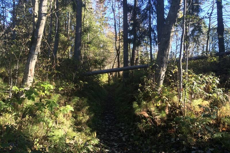 """Flere stier går på """"hulveier"""""""