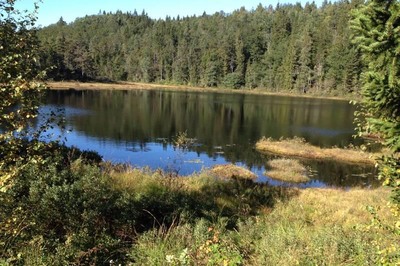 Skogsvann i enden av skogsveien sør for Eikelandsvannet