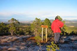 Utsikt mot Trondheim fra Higeråsen - Foto: Vassfjellkapellet