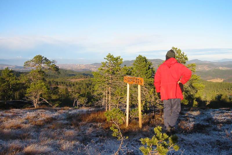 Utsikt mot Trondheim fra Higeråsen