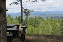 Sauer ved uteplassen på Koboltkoia - Foto: Anne Gallefos Wollertsen/DOT