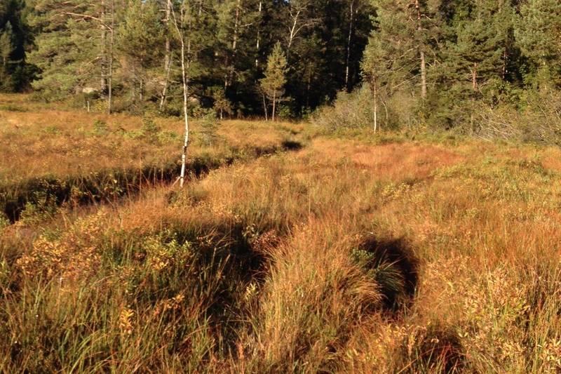 Stien ved Støletjønn går langs ei grøft
