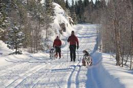 Nydelige løyper inn mot Fugleleiken - Foto: Telemark Turistforening