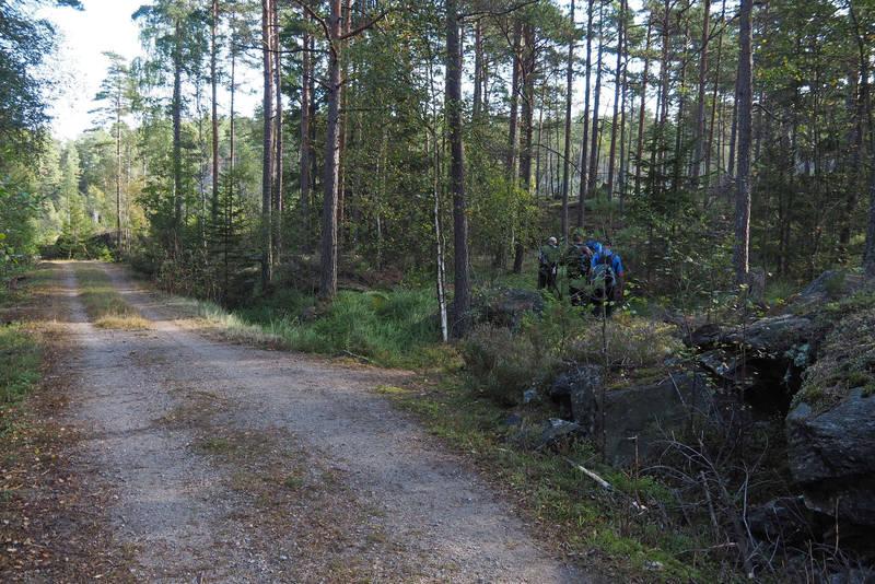 Stien til Krysstjern tar av til høyre fra skogsbilveien.