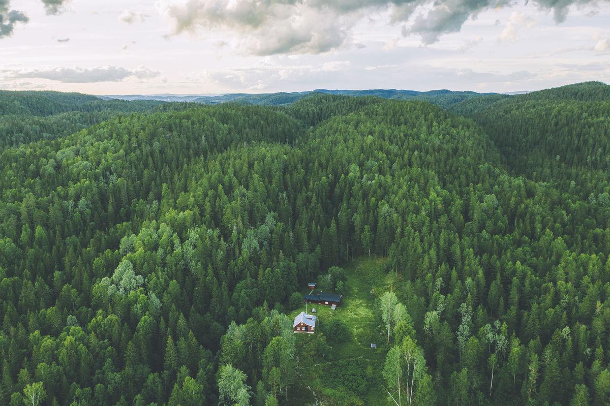 Hytta ligger midt i Østmarka