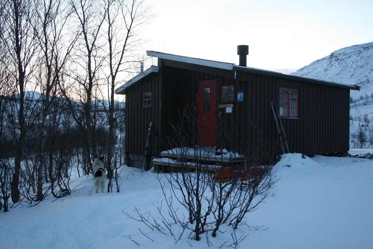 Blåkollkoia, desember 2007