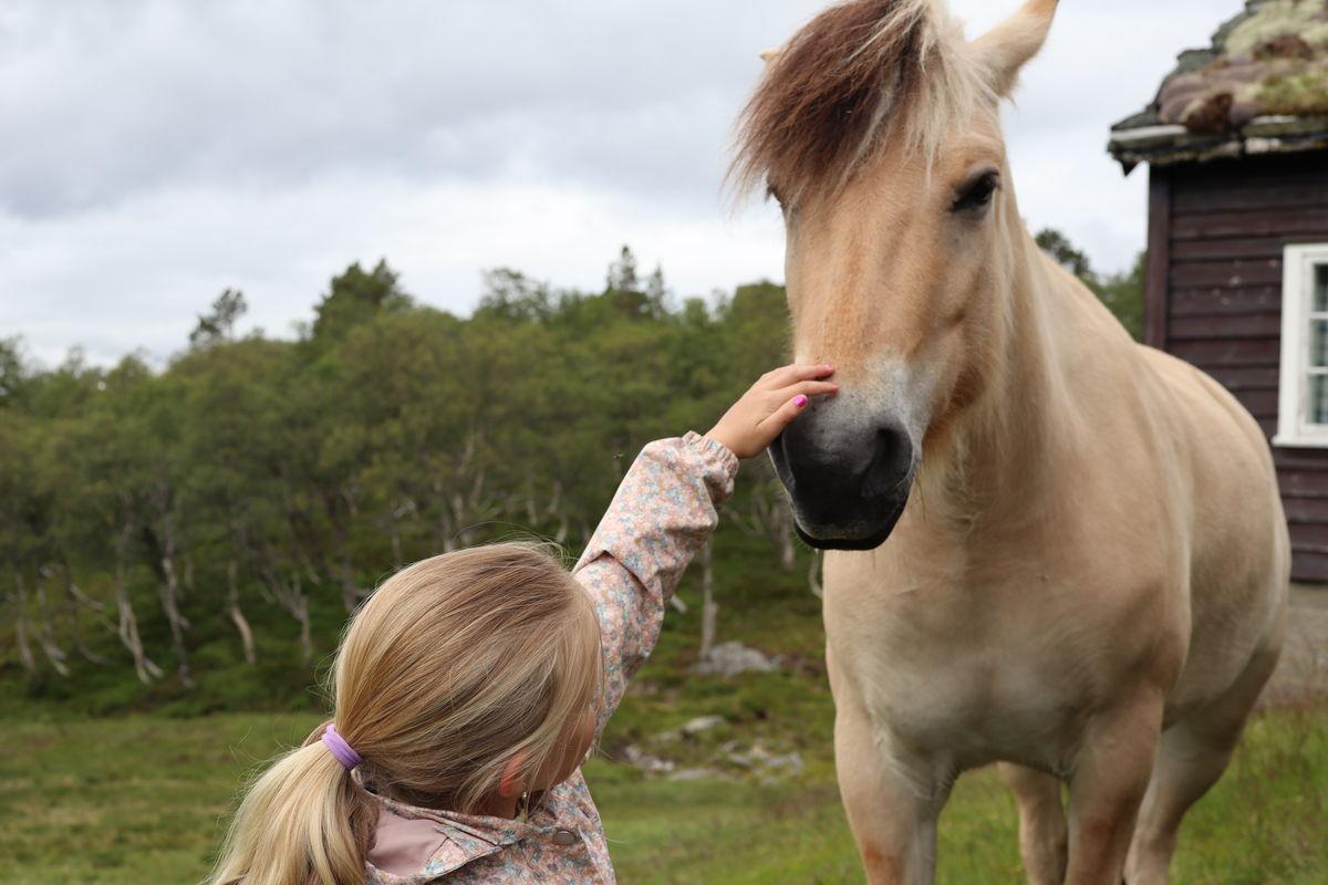 Om sommeren kan man være heldig å møte på en av hestene som går på sommerbeite ved Jonstølen.