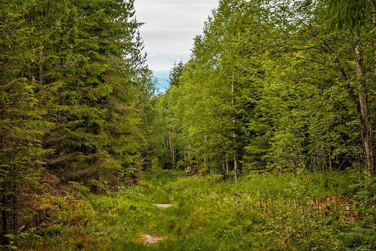 Skogsvei ved Branderudveien