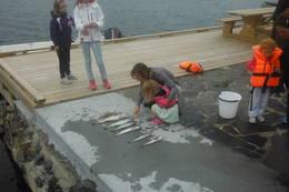 Mange har fått fisk (og måker) på kroken her. Barn elsker dette.  - Foto: Frank-Werner Unsgaard