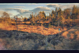 Stormyra -  Foto: Per Olav Skjesol