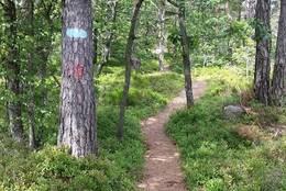 Turen går på idylliske skogsstier. - Foto: Lars Jøran Sundsdal