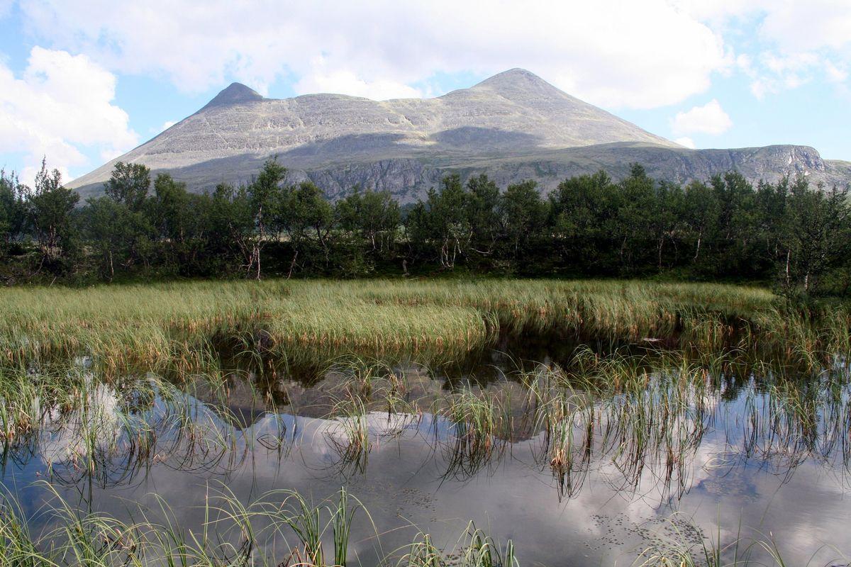 Alvdal Vestfjell