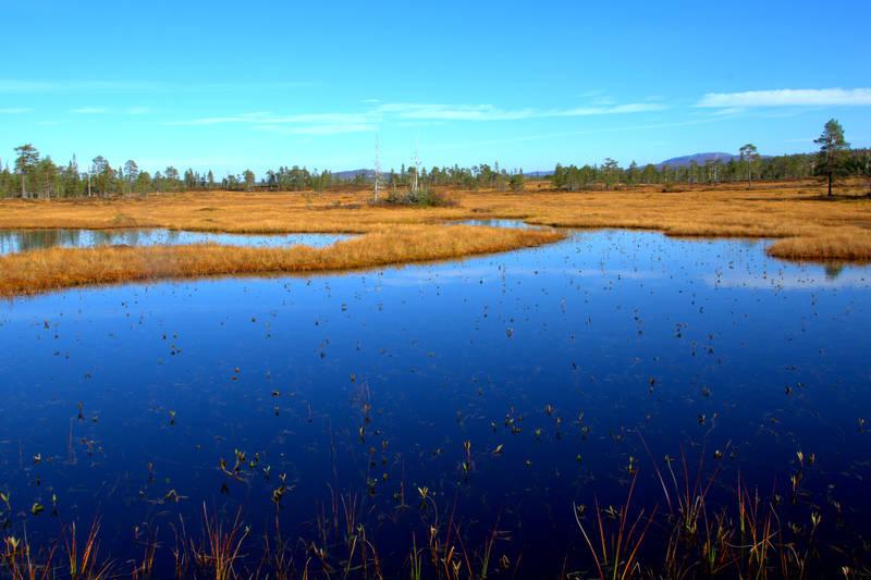 Våtmarksområder ved Branok