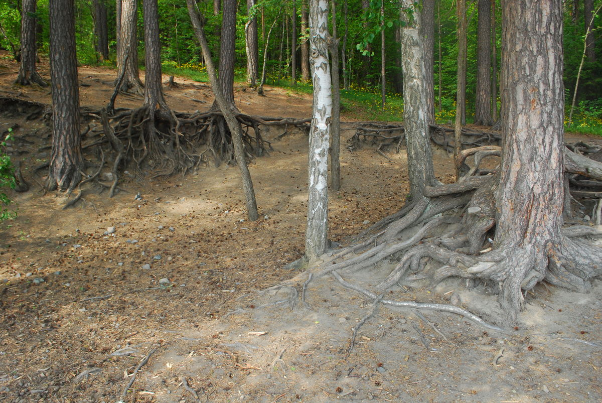 "En liten ""trollskog"" passeres."