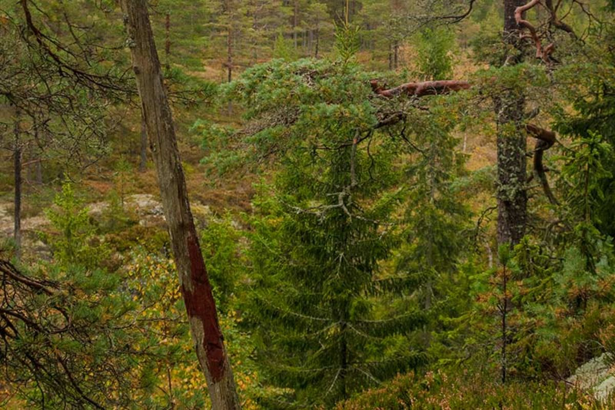 Kommunedelet mellom Fet, Skedsmo og Sørum er markert med en påle