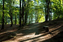 I Vålandsskogen er det lett å finne skogens ro.  - Foto: John Petter Nordbø